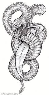 19 best snake images on pinterest drawings snake tattoo and animals