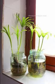 indoor plants india no soil indoor plants ahometherapist