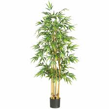 buy native plants online darxxidecom page 5 darxxidecom garden plants