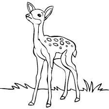 how to draw a deer for kids deer color pages nature coloring