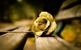 Gold Flowers Flower Gold Rose Mood Wallpaper 1680x1050 22880