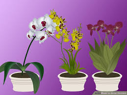 What Is An Orchid Flower - 2 easy ways to grow orchids with pictures wikihow