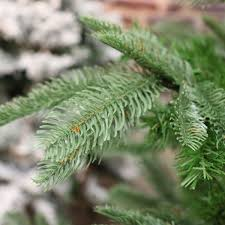 sapin de noel artificiel plus vrai que nature sapin artificiel de noël nobilis h210 cm vert sapin sapin