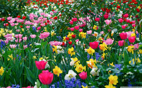 Image Of Spring Flowers | pictures of spring flowers 24