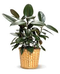 15 best air purifying plants our service company