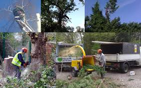 haywards mowing tree work