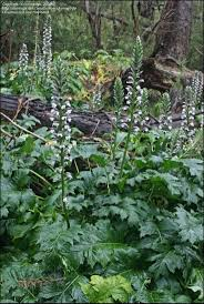 low light outdoor plants 68 best shade plants images on pinterest shade plants shadow