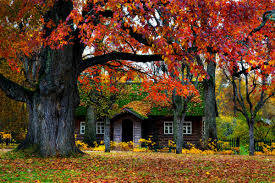 cottage house houses autumn splendor leaves trees fall nature woods forest