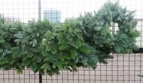 christmas tree centre wreaths u0026 christmas trees ireland cork