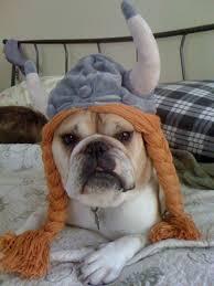 French Bulldog Costumes Halloween 83 Bulldogs Images English Bulldogs Animals