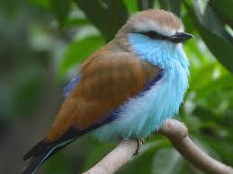 free stock photo in high resolution bird 2 animals