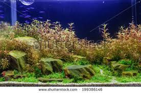 Aquascaping Freshwater Aquarium Aquascaping Stock Images Royalty Free Images U0026 Vectors Shutterstock