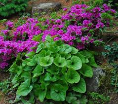 64 best alpine u0026 rock gardens images on pinterest plants