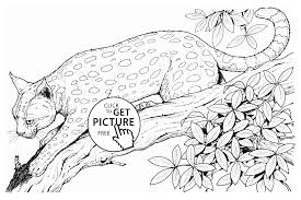 cheetah animal coloring page for kids animal coloring pages