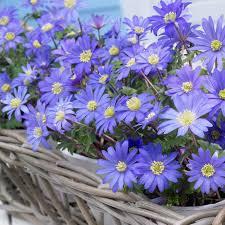 deer resistant hyacinth flower bulbs garden plants u0026 flowers
