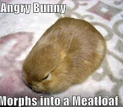 Angry Bunny Meme - angry bunny morphs into a meatloaf memes and comics