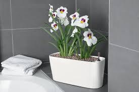 best indoor self watering planters available online