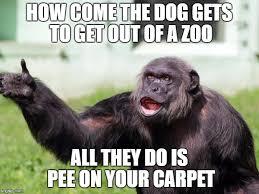 Monkey Meme - angry supervisor monkey meme generator imgflip
