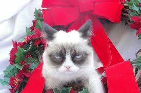 Grumpy Cat Memes Christmas - grumpy cat christmas wallpaper wallpapersafari