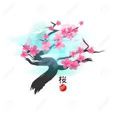 japanese cherry blossom tree vector illustration royalty free