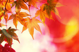 miscellaneous trees colorful fall beautiful creative lovely
