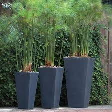 tall modern outdoor planter gardening pinterest planters