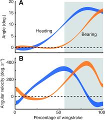 kinematics of slow turn maneuvering in the fruit bat cynopterus