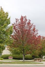 spirit halloween redding ca 11 best seasons images on pinterest