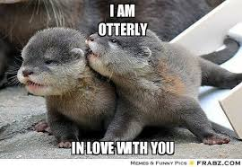 Cute Love Meme - otter positive meme google search vw pinterest otters
