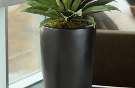 palm tree home decor plant home decor plants living room trends with japanese