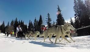 husky adventures and dog sledding near tatra mountain in slovakia