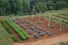 Mulching Vegetable Garden by File Vegetable Garden Detail Jpg Wikimedia Commons