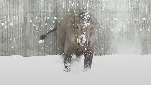 snow won u0027t stop the animals in oregon zoo from having fun