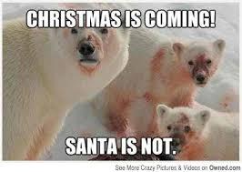 Coke Bear Meme - those coke cola bears get angry around christmas bear humor