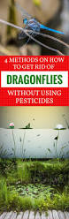 4 methods on how to get rid of dragonflies without using pesticides
