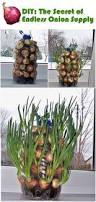 155 best growing food indoors images on pinterest indoor