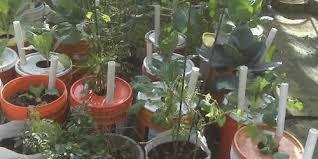 urban survival gardening urban survival site
