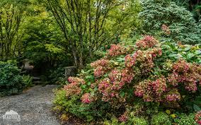Bellevue Botanical Garden Lights Bellevue Botanical Garden