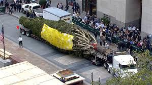 rockefeller center tree arrives on the plaza has