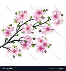 japanese tree cherry blossom royalty free vector