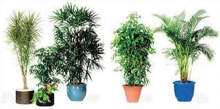 plante dans la chambre pollution intérieure