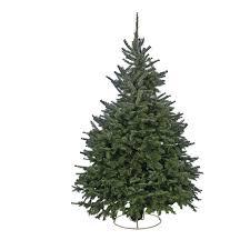 cut fraser fir real tree 7 8ft at homebase co uk
