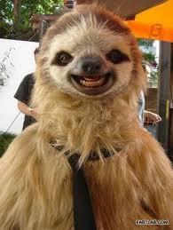 sloth memes 04