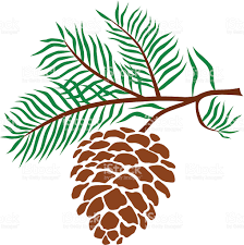 pine cone stock vector art 178903737 istock