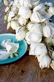 les fleurs comestibles en cuisine 1000 изображений на тему fleurs comestibles в бель
