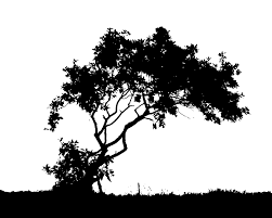 black tree silhouette image clip library