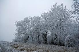 trees am birting