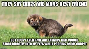 Dog Poop Meme - mans best friend imgflip