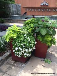 using georgia native plants hummingbird favorites in my garden ideas for container gardens