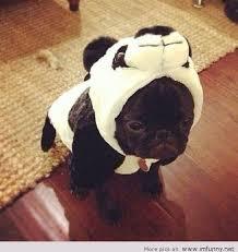Panda Meme Mascara - panda